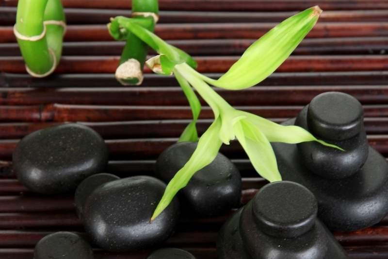 Bambus za kosu u samponu